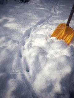 猫の足跡と新雪の写真・画像素材[1664356]