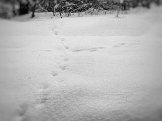 雪景色と動物の足跡の写真・画像素材[1727202]