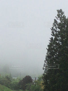 森の中の大きな木の写真・画像素材[2141613]