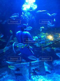 魚の写真・画像素材[677915]