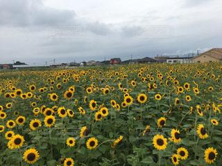 花の写真・画像素材[677924]