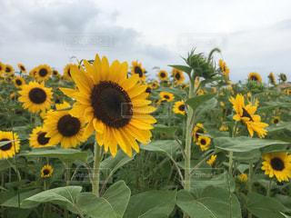花の写真・画像素材[677925]