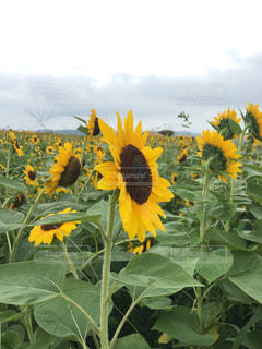 花の写真・画像素材[677926]