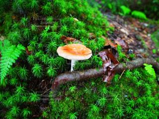 森の写真・画像素材[677960]