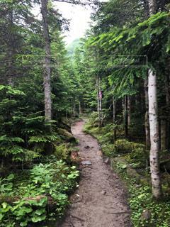 森の写真・画像素材[677965]