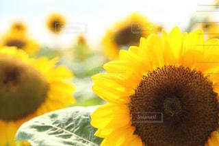 夏の写真・画像素材[685712]
