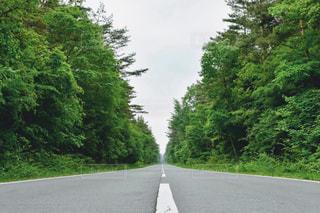 森林の写真・画像素材[686014]
