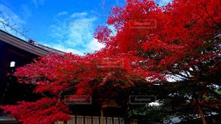 京都の赤 - No.686022