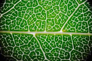 植物の写真・画像素材[677690]