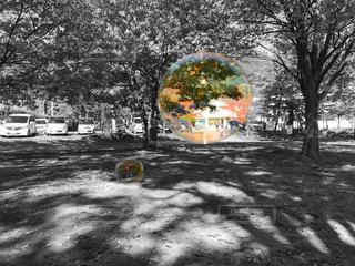 シャボン玉の写真・画像素材[1050409]