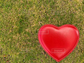 芝生にハートの写真・画像素材[1516558]
