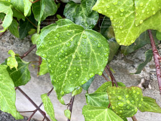 庭園の緑の植物の写真・画像素材[1646737]