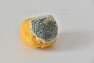青カビが生えた柚子の写真・画像素材[3470315]