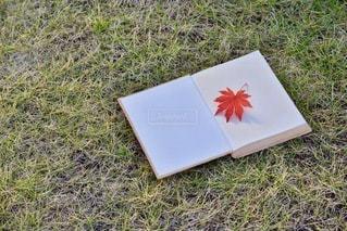 芝生の上の本の写真・画像素材[3470333]