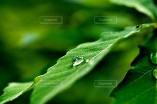 葉っぱの上の水滴の写真・画像素材[3475534]