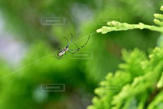 クモの綱渡りの写真・画像素材[3475549]
