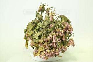 枯れた花の写真・画像素材[3475560]