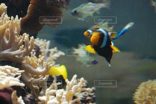 サンゴの写真・画像素材[677668]