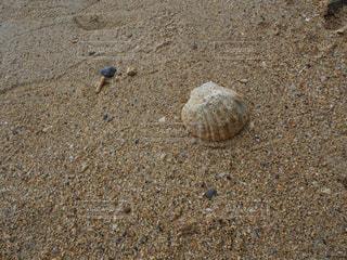 砂浜と貝殻の写真・画像素材[1303085]