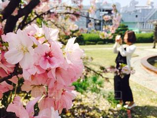 春の写真・画像素材[677984]