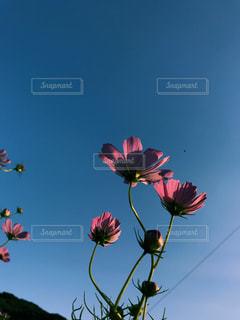 近くの花のアップの写真・画像素材[1521034]
