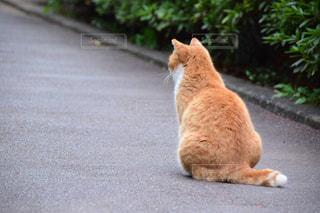 猫の写真・画像素材[684597]