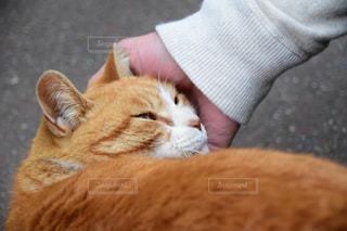 猫の写真・画像素材[684598]