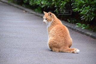 猫の写真・画像素材[684599]
