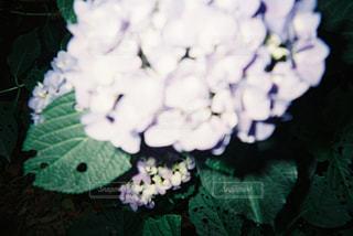 花の写真・画像素材[681910]