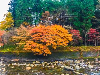 秋の写真・画像素材[680324]