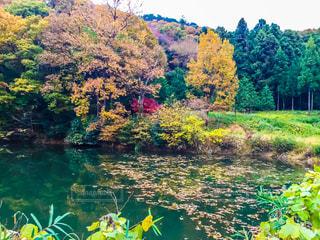 秋の写真・画像素材[680338]