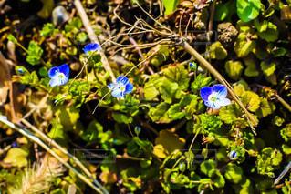 花の写真・画像素材[680421]
