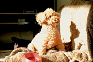 近くに犬の隣に座っているぬいぐるみのアップの写真・画像素材[877663]