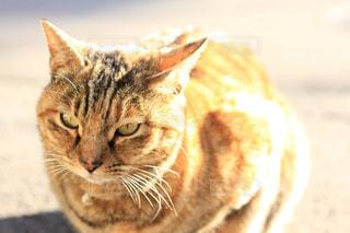 日向ぼっこする猫の写真・画像素材[1008822]
