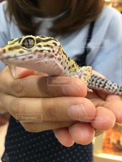 動物 アニマル トカゲ ヤモリ 爬虫類 恐竜の写真・画像素材[680165]
