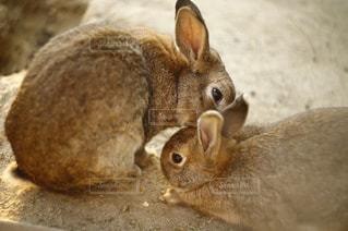 近くに動物のアップの写真・画像素材[851244]
