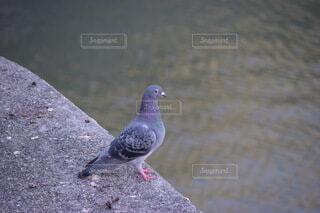砂の中に立っている鳥の写真・画像素材[3813987]