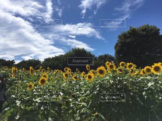 花の写真・画像素材[679293]