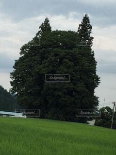 トトロの木の写真・画像素材[679194]
