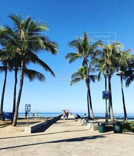 ハワイの写真・画像素材[679218]