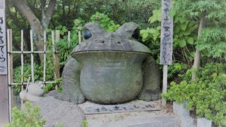 如意輪寺かえる寺の写真・画像素材[775049]