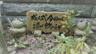 如意輪寺かえる寺の写真・画像素材[775068]