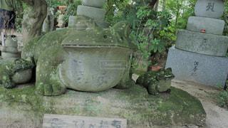 如意輪寺かえる寺の写真・画像素材[775071]