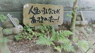 如意輪寺かえる寺の写真・画像素材[775084]