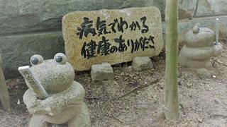 如意輪寺かえる寺の写真・画像素材[775090]