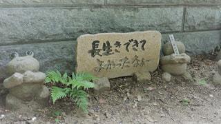 如意輪寺かえる寺の写真・画像素材[775091]