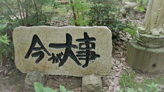 如意輪寺かえる寺の写真・画像素材[775092]