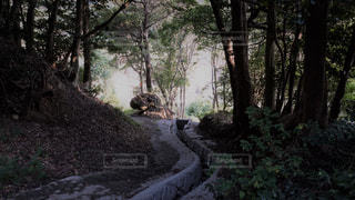 木々の写真・画像素材[775103]