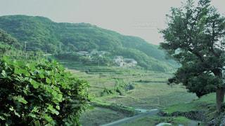 春日の棚田の写真・画像素材[775104]