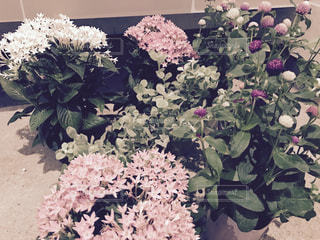 花の写真・画像素材[679771]